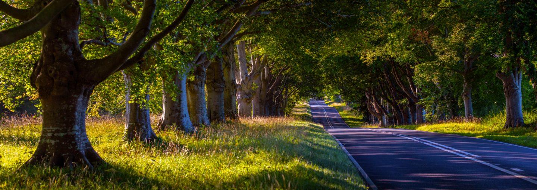 Panormama rural road